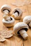 грибы кнопки стоковая фотография rf