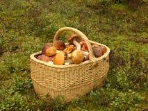 грибы корзины стоковое фото rf