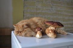 грибы кота Стоковое Изображение RF
