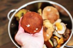 Грибы леса в корзине подосиновик гриба в руке Стоковое Изображение