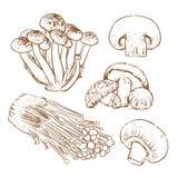 Грибы на белой предпосылке, куске гриба, гриба Стоковое Изображение