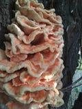 Грибы на дереве Дерев-жильцы стоковые изображения rf