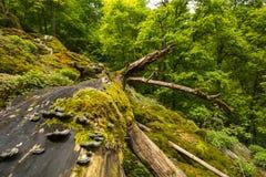 Грибы на дереве на Uracher Wasserfälle, плохом Urach, Германии Стоковая Фотография