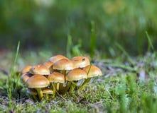 Грибы на зеленой траве Стоковые Фото