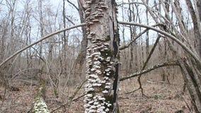 Грибы на мертвом дереве видеоматериал