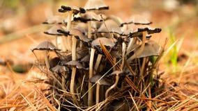 Грибы на поле леса Стоковые Изображения