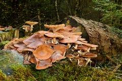 Грибы на treetrunk Стоковое фото RF