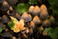 грибы осени близкие вверх Стоковое фото RF