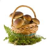 грибы подосиновика корзины Стоковое Изображение