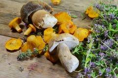 Грибы, подосиновик и тимиан лисички на деревенском деревянном столе Сырцовая свежая предпосылка гриба лисички Стоковая Фотография RF