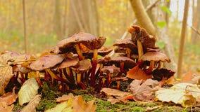 Грибы распадаться Брауна на поле леса стоковое фото