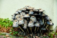 грибы распадаться стоковое фото