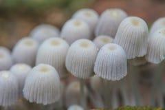 Грибы растя на дереве в реальном маштабе времени в лесе Стоковые Фотографии RF