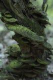 Грибы растя на пне дерева в лесе Стоковые Фото