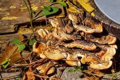 Грибы растя на стволе дерева Стоковое Изображение RF