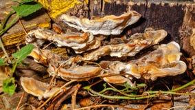 Грибы растя на стволе дерева Стоковая Фотография RF