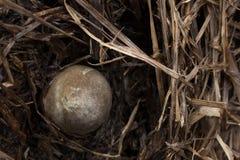 грибы соломы Стоковая Фотография
