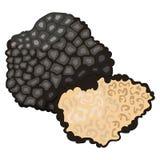 Грибы: трюфель стоковое изображение rf