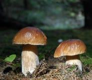 грибы стоковая фотография