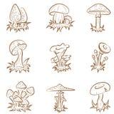 грибы иллюстрация штока