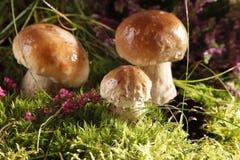 грибы стоковое изображение