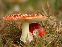 грибы 2 Стоковое Изображение RF
