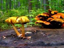 грибы Стоковые Фото