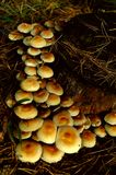грибы Стоковое фото RF