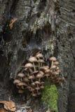 грибы Стоковая Фотография RF