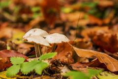 грибы 3 Стоковая Фотография RF