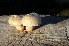 грибы Стоковое Изображение RF