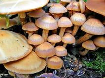 грибы Стоковое Фото