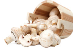 грибы champignons Стоковое фото RF