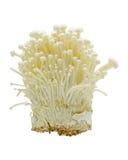 грибы enoki Стоковая Фотография RF