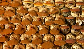 Грибы Lingzhi в ферме гриба Стоковые Изображения
