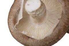 Грибы Portobello на белизне Стоковые Изображения
