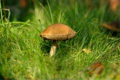гриб березы Стоковые Изображения RF