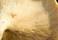 гриб вниз Стоковое Изображение RF