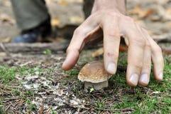 гриб выбирая вверх Стоковое фото RF