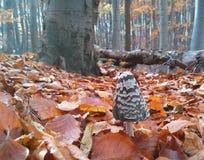 Гриб в лесе во время осени стоковая фотография