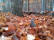 Гриб в лесе во время осени стоковые фотографии rf