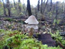 Гриб в мхе в лесе Стоковая Фотография RF
