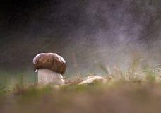 Гриб в пуще осени Стоковая Фотография