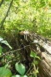 Гриб в пуще Стоковое фото RF