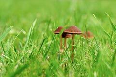 Гриб в траве Стоковое Изображение