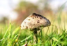 Гриб в траве Стоковые Фотографии RF