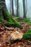 Гриб в туманном лесе стоковые фото