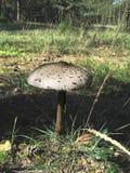 гриб грибков Стоковые Фотографии RF