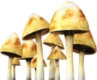 Гриб, грибы, Toadstool, изолированные Toadstools, Стоковое фото RF