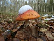 Гриб и лес на центральной части России стоковая фотография rf